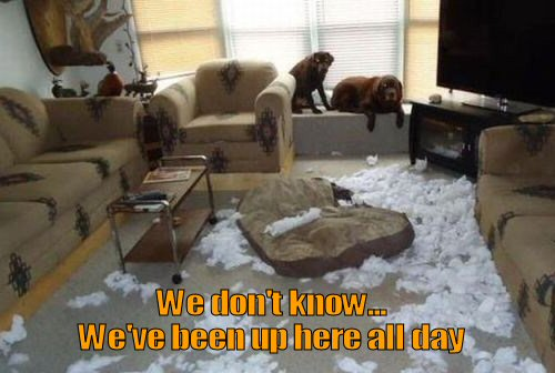 dog ripped up dog bed
