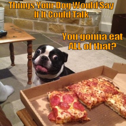 dog staring at pizza
