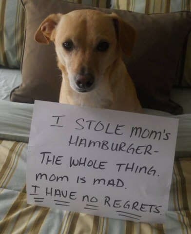 dog stole mom's hamburger
