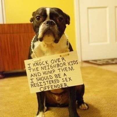 Funny-dog-shame-knock-over-kids