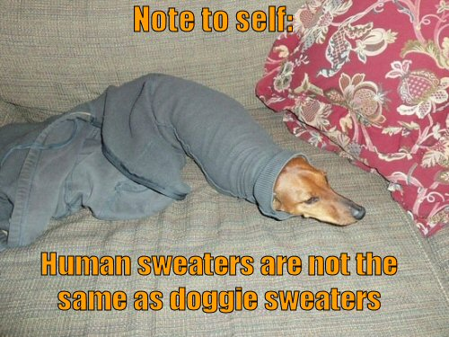dog stuck in sweater