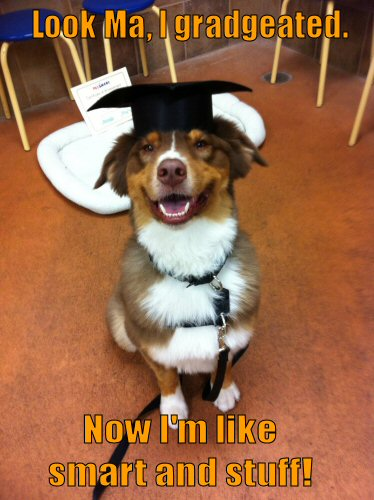 Dog graduated