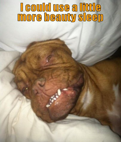funny-dog-picture-more-beauty-sleep