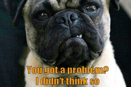 Pug looking tough