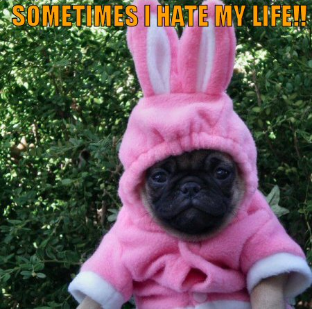 Pug in a pink bunny outfit