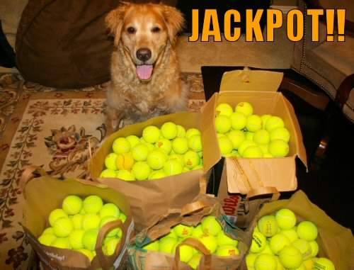 Dog hits tennis ball jackpot
