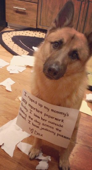 dog getting shamed