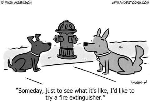 two dog talking at a fire hydrant