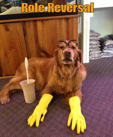 dog with cleaning gloves on