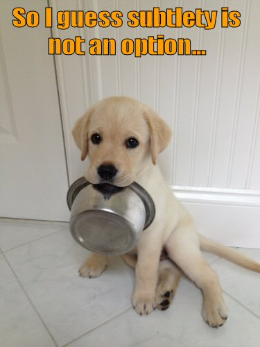 Cute puppy holding food dish in mouth