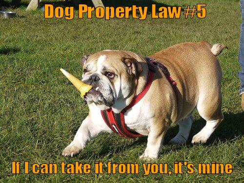 bulldog stealing ice cream cone