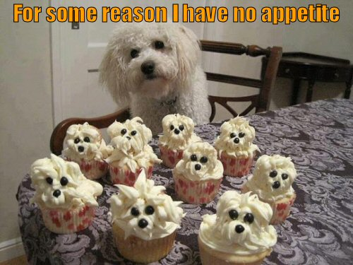 Dog eye balling cupcakes that look like puppies
