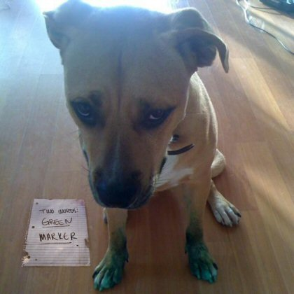 dog got into green marker