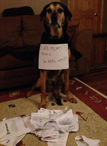 dog ate mom's taxes
