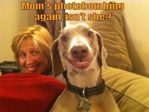 human photobombing dog