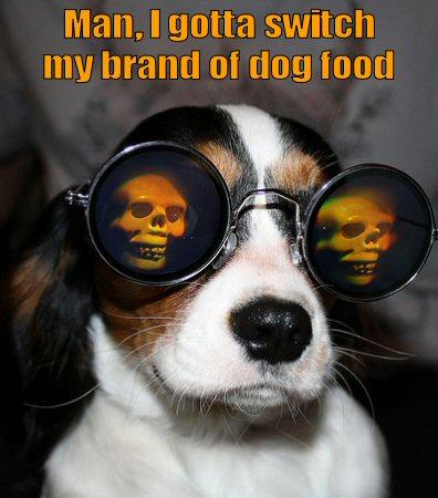 dog wearing skull glasses