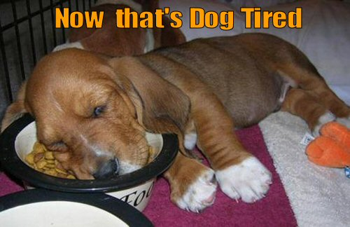 cute puppy sleeping with head in food bowl