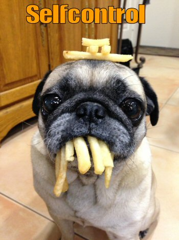 Pug with French Fries on head