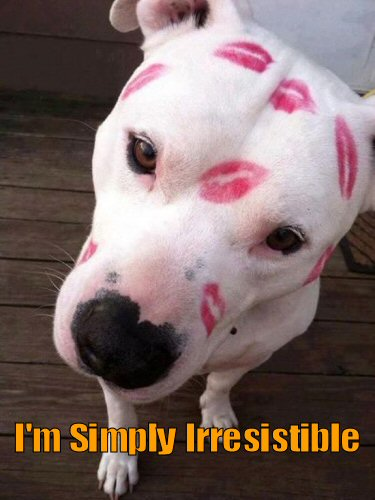 cute white dog with red kisses on head