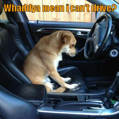 Sad dog wants to drive car
