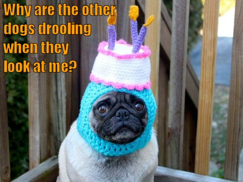pug with birthday cake hat