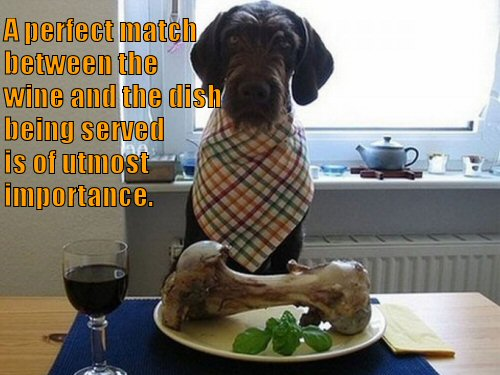 Dog drinking wine with meal