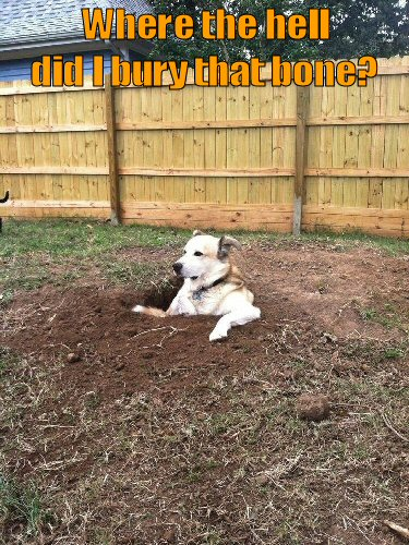 dog sitting in hole that he dug
