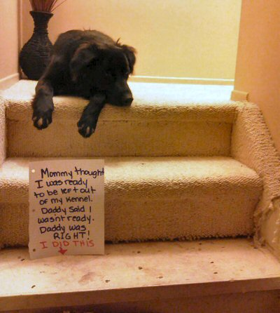 dog shaming - carpet destroyer