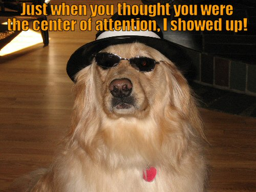 Dog looking cool with hat and sunglasses