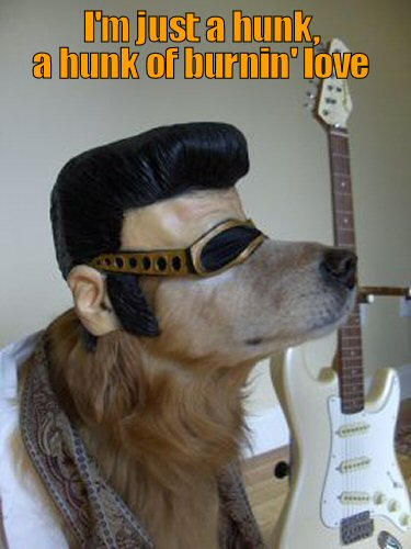 Dog Dressed as Elvis