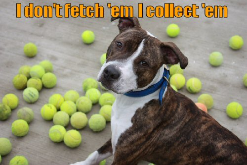 Dog with a large collection of tennis balls