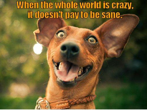 crazy looking dog
