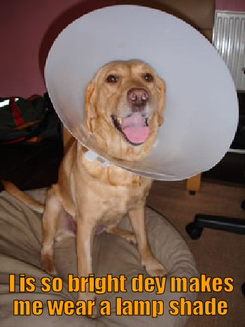 Dog wearing the cone of shame