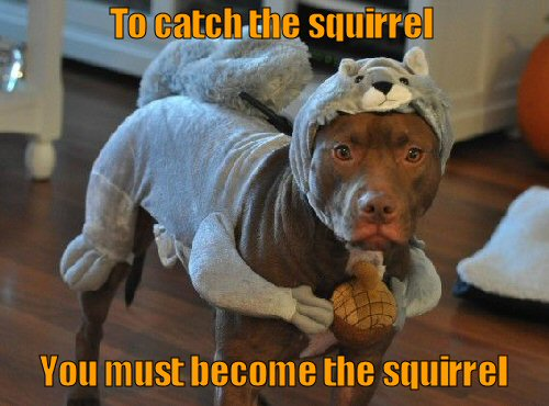 Dog dressed in squirrel costume