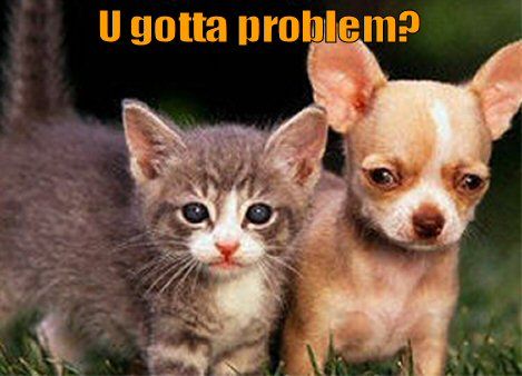 Cute kitty and little dog