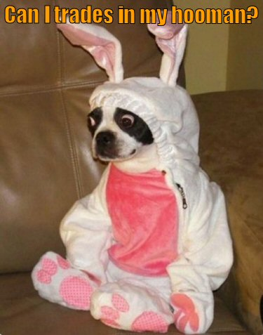 Dog disgusted about being dressed as pink bunny