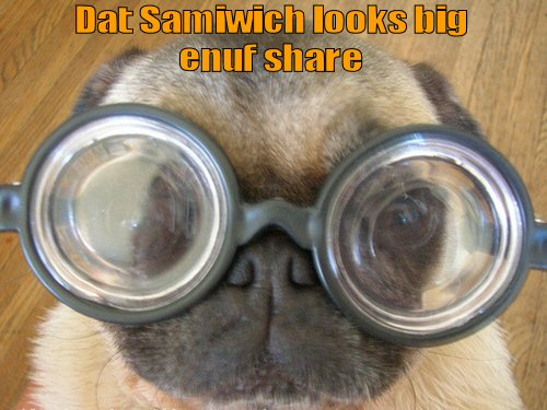 pug with big glasses