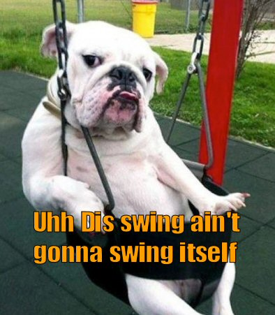 Bulldog in a swing