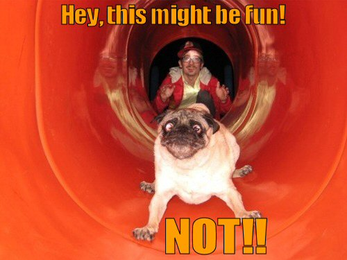 Pug looking terrified going down slide