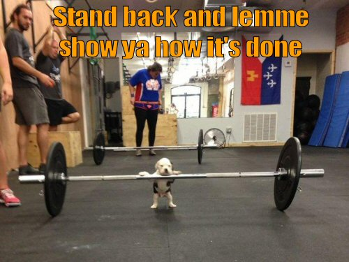 cute puppy lifting weights