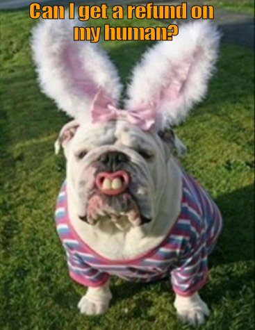 Bulldog dressed in Bunny Rabbit costume