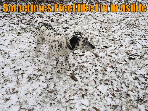 invisible-dog