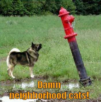 funny-dog-picture-damn-cats