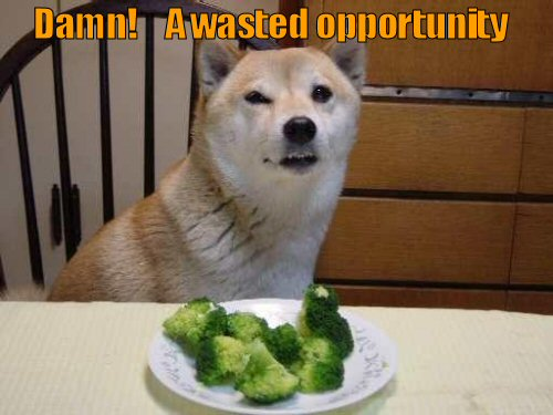 Dog sitting in front of a plate of broccoli