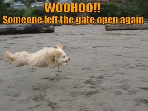 funny-dog-picture-woohoo