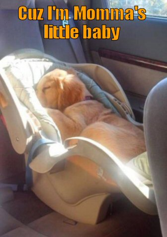 puppy sleeping in a baby's seat
