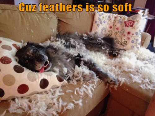 funny-dog-feathers-is-so-soft