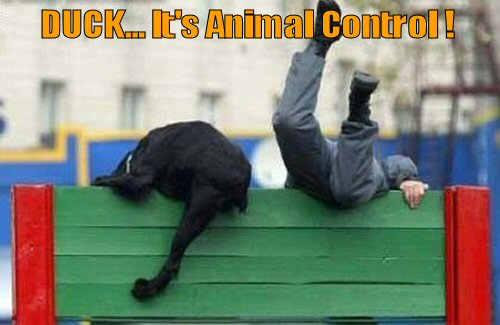 funny-dog-its-animal-control