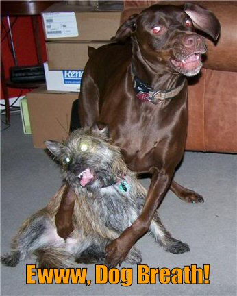 funny-dog-picture-dog-breath