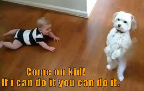 Dog showing baby how to walk